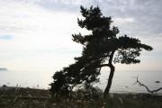 Gotland 2010_007
